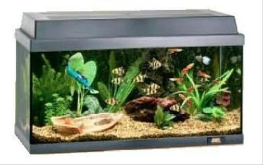 juwel aquarium korall 60 van juwel. Black Bedroom Furniture Sets. Home Design Ideas